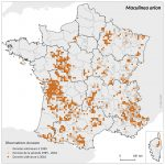 Carte de répartition_Maculinea arion_2016